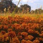 Höhenpark Killesberg - Buntes Blumenmeer