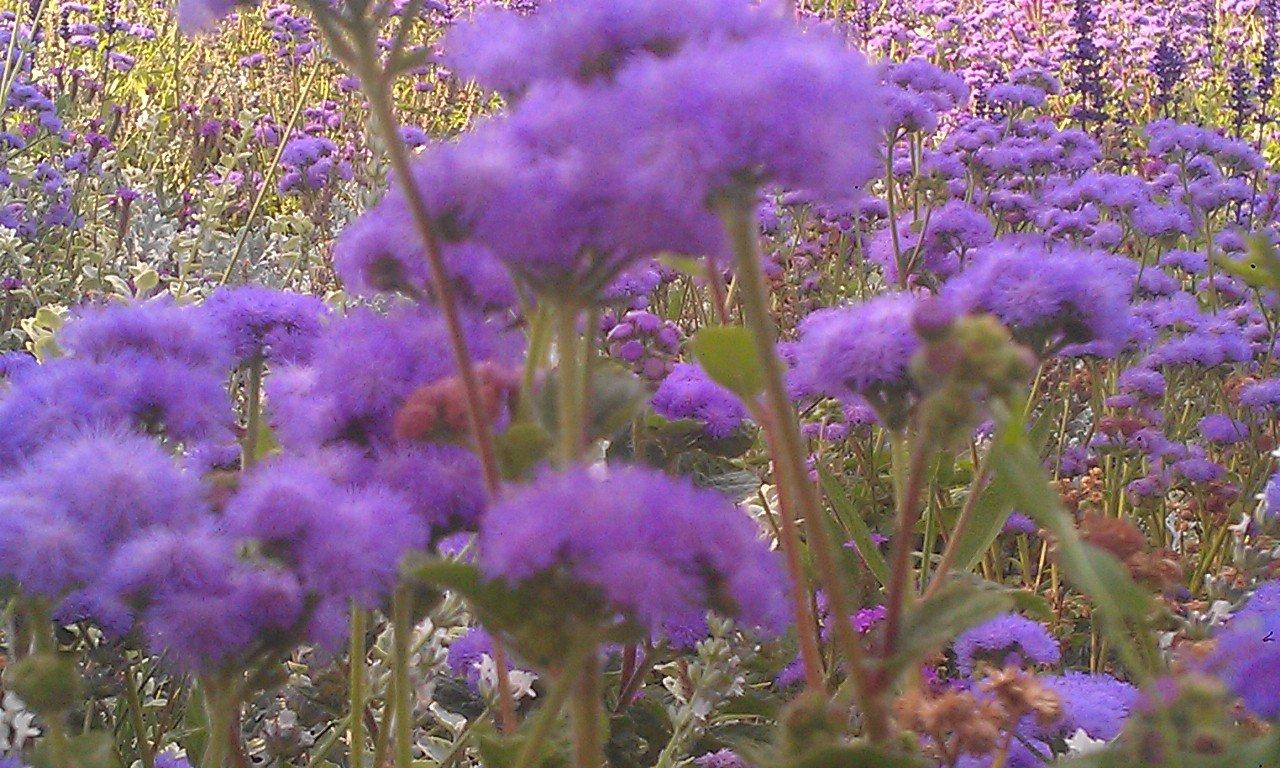 Der Höhenpark Killesberg- Blumenmeer in bunt