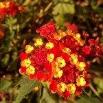 Killesberg Höhenpark - Blumen in gelb und rot