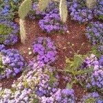 Killesberg Höhenpark - Farbenfrohes Blumenbeet mit Kakteen