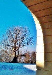 Schloss Solitude mit altem Baumbestand