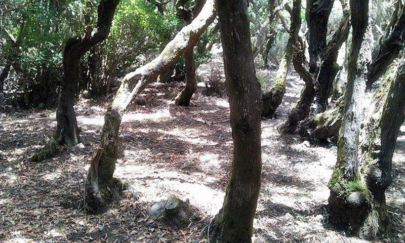 Auf La Gomera wandern: Der Nebelwald im Nationalpark Garajonay auf La Gomera