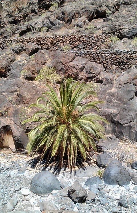 Felsen, Berge, Schluchten: auf La Gomera wandern 5