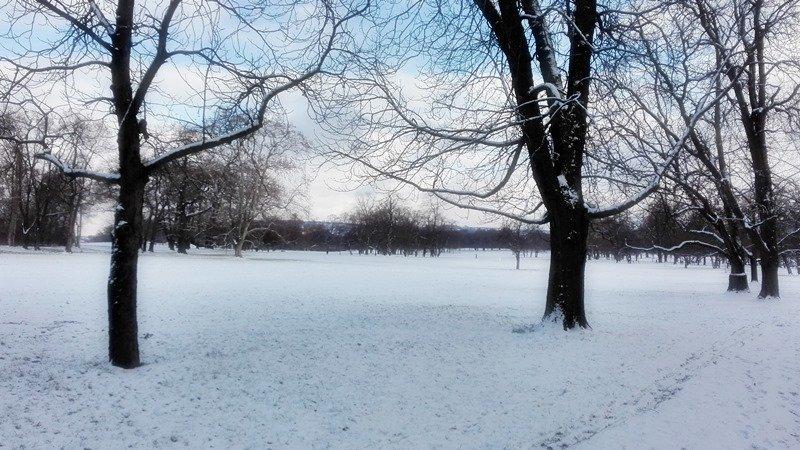 Rosensteinpark in Stuttgart - Baumwelten im Winter