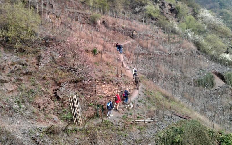 Klettersteig Calmont : Der calmont klettersteig an mosel zwischen hängen und reben