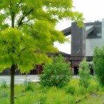 Zeche Zollverein - Die Natur erobert zurück