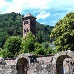 Kloster Hirsau Calw - Turm mit Wald (1 von 1)