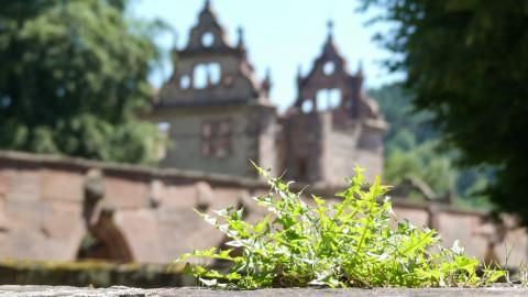 Das Kloster Hirsau – Historie auf Schritt und Tritt