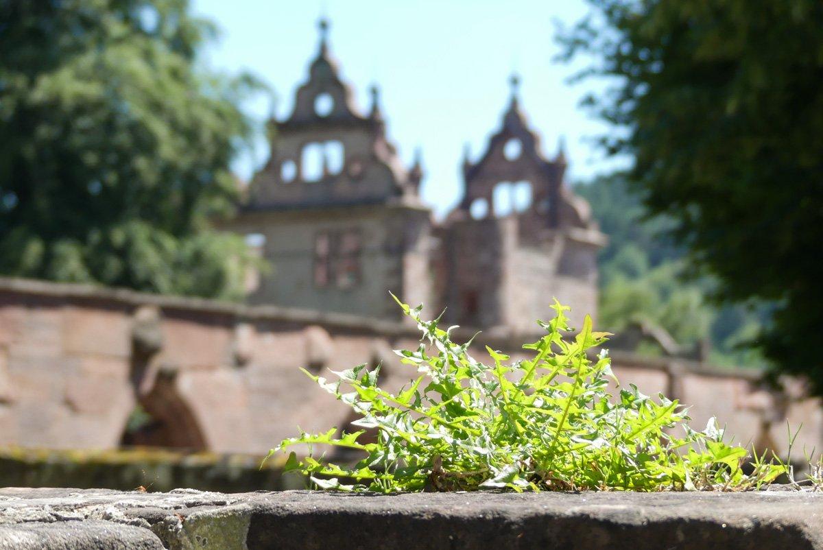 Kloster Hirsau Calv - mit dem ehemaligen Jagdschloss im Hintergrund