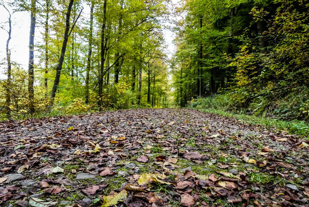 Esslinger-Spitalwald-bei-Stuttgart-herbstlich-schöner-Waldspazierweg