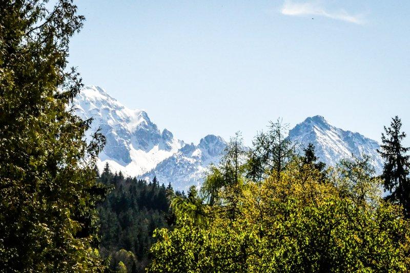 Allgäu rund um Füssen - Baumwipfel und Berggipfel