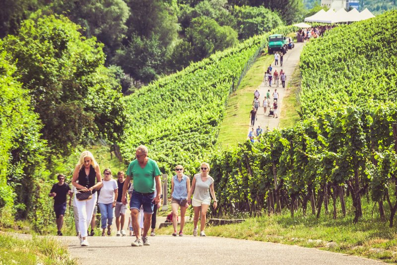 Weinwanderweg in Stuttgart - Weinverköstigung am Württemberg - Genussfreuden