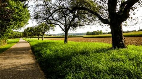 Wanderwege: von Remseck am Neckar über Hoheneck bis Ludwigsburg