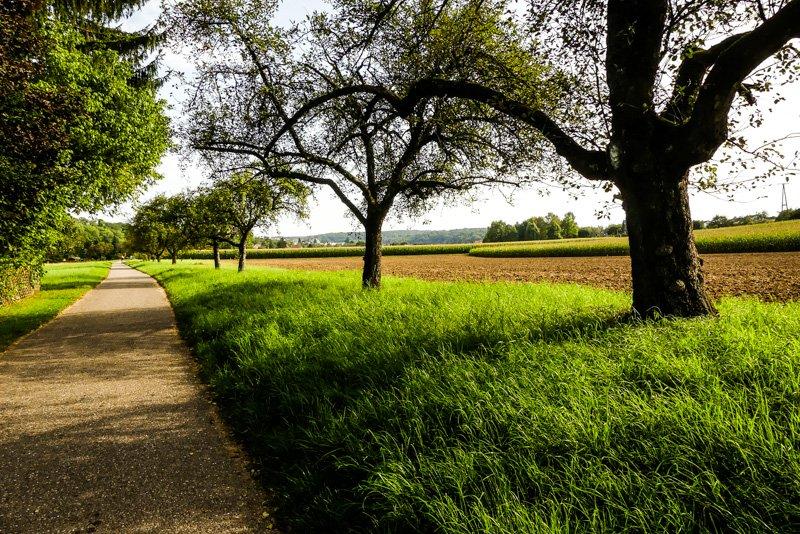 Wanderwege - von Remseck am Neckar bis Ludwigsburg - Landwirtschaft und Landschaft