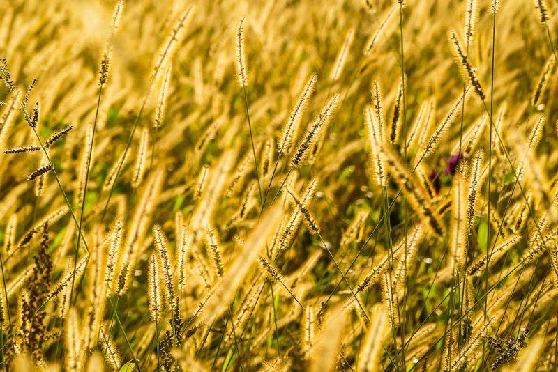 Wanderwege - von Remseck am Neckar bis Ludwigsburg - eine Runde Landwirtschaft auf der Strecke