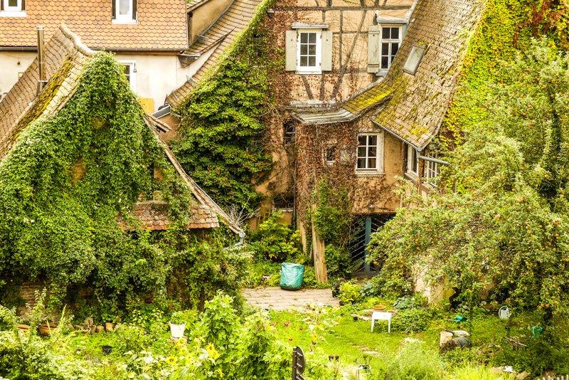 Wissembourg - Frankreich Elsass - knallig grüne Hinterhofidylle