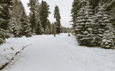 Durch den schneeweißen Schwarzwald auf dem Hochmoor Kaltenbronn