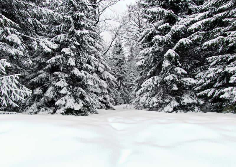 Hochmoor Kaltenbronn - ein wunderschönes Winterwunderland