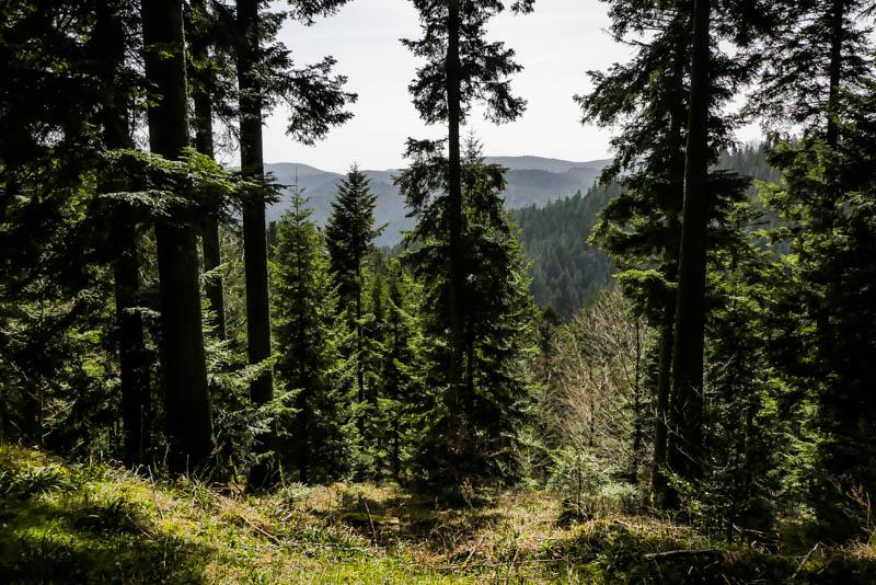 Wandertour Schiltach - Schenkenzell - Fernblick der schwarzwälder Art