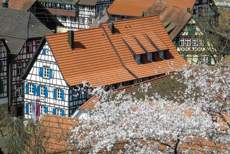 Wandertour Schiltach - Schenkenzell - Frühlingsidylle in Schiltach