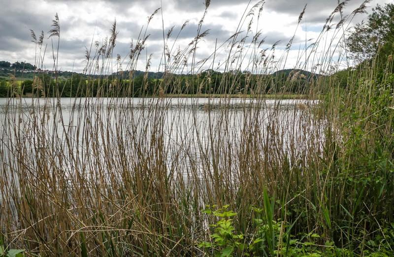Der-Breitenauer-See-Naherholungsgebiet-und-Badesee-Uferabschnitt-mit-Schilfbewachsung