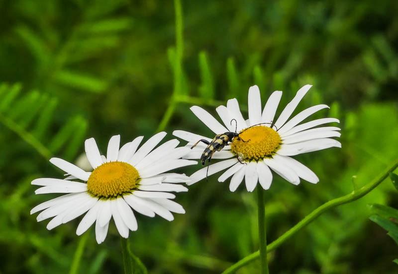 Der-Huzenbacher-See-bei-Schwarzenberg-im-Nationalpark-Schwarzwald-intakte-Insektenwelt