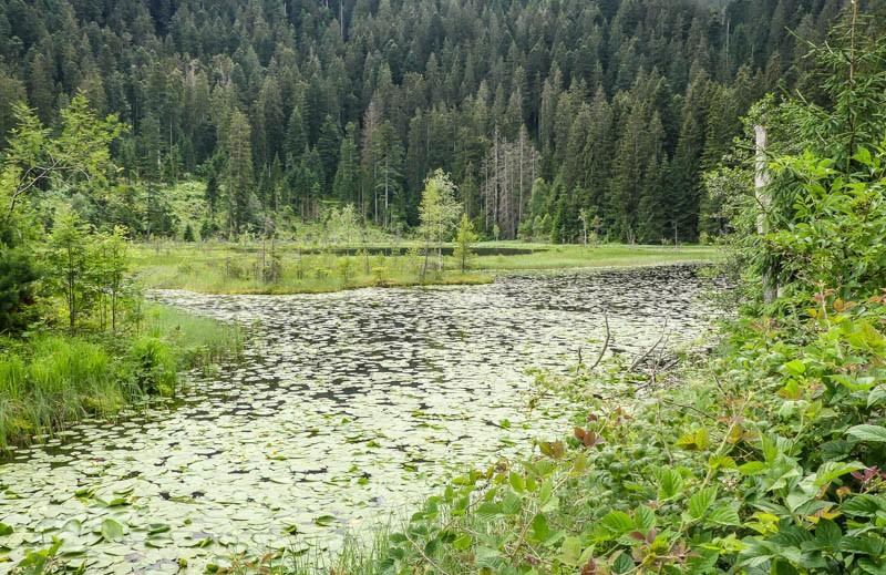 Der-Huzenbacher-See-bei-Schwarzenberg-im-Nationalpark-Schwarzwald