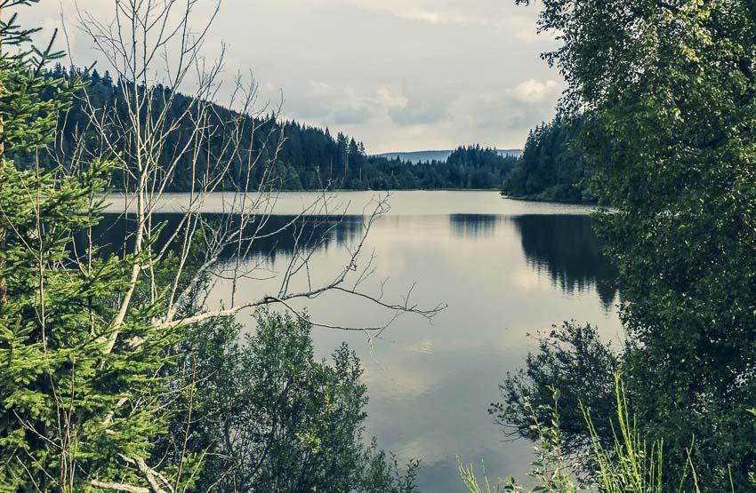 Feldsee am Feldberg - der Windgfällweiher - 3-Seen-Tour im Hochschwarzwald