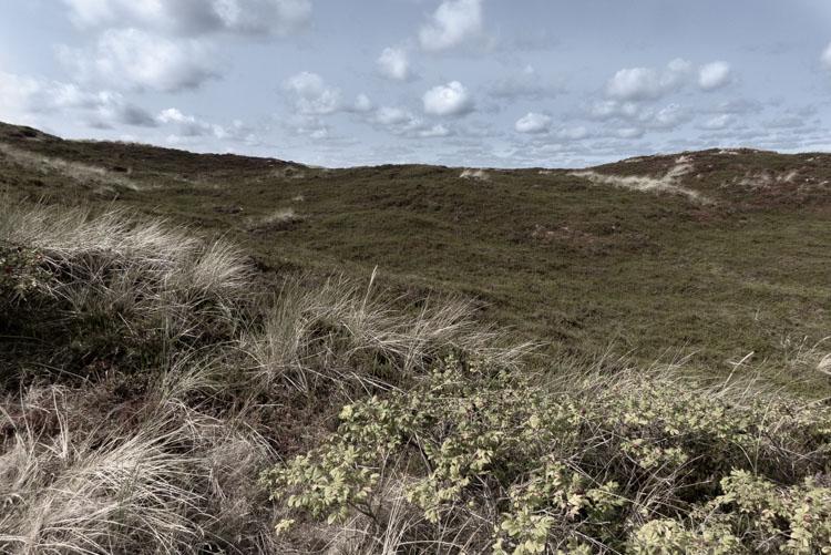 Strandpromenade Sylt - ab in die Wunderwelt der Dünen