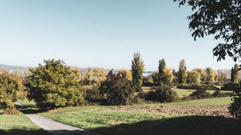 Am Bodensee: Gaienhofen Horn und die Hornspitze auf der Höri Halbinsel