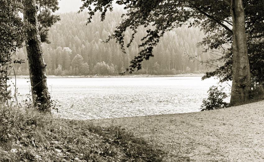 Badeseen rund um Stuttgart - der großartige Schluchsee im Schwarzwald
