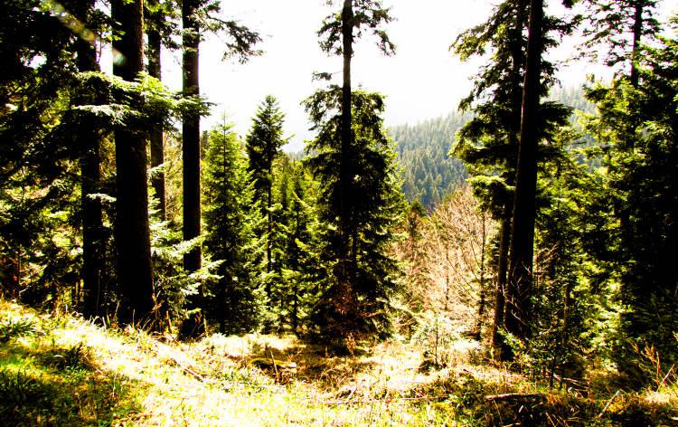 Laufen die Nackt durch Wälder Diese Dinge