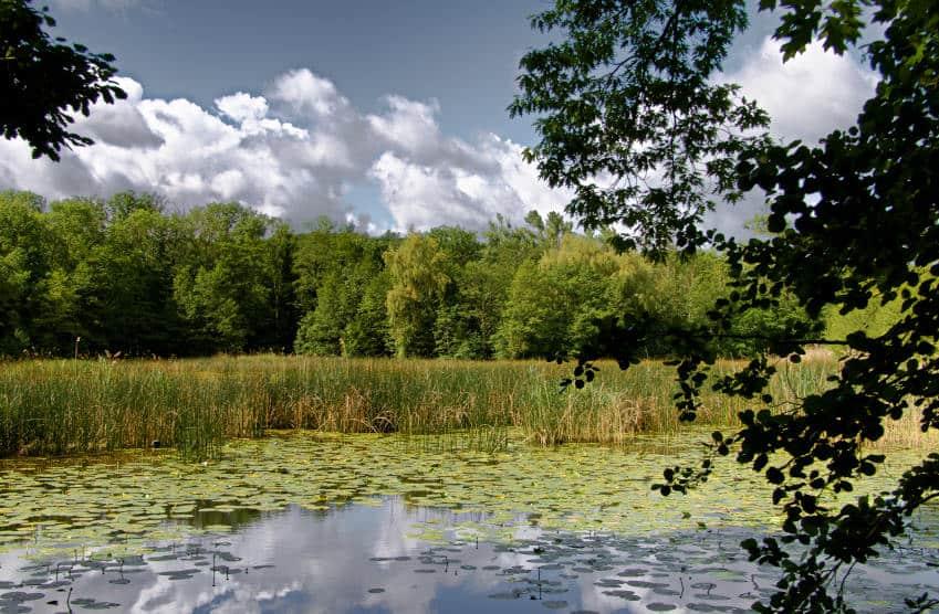 Bleichsee bei Löwenstein - die Wasserrosen werden bald erblühen