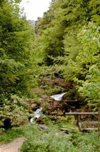 Bei Halblech wandern - Ammergauer Alpen - Blick auf den Kenzenbach