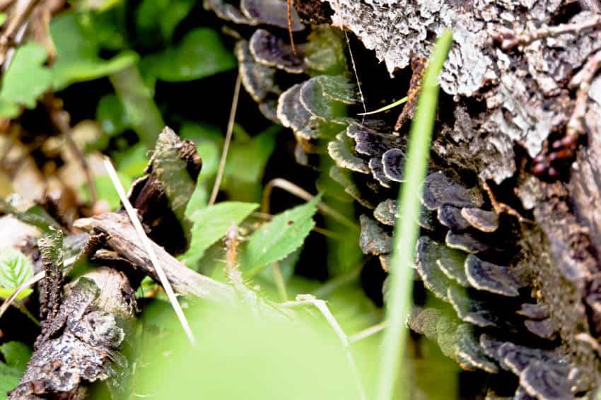 Glemsweiher im Rotwildgehe bei Stuttgart - der Natur ihre Ruhe lassen