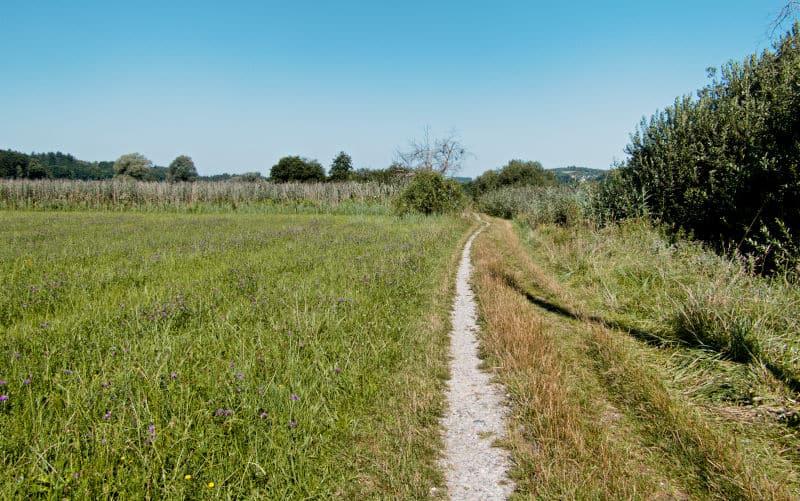 Der Mindelsee bei Radolfzell am Bodensse - der Weg ist das Ziel