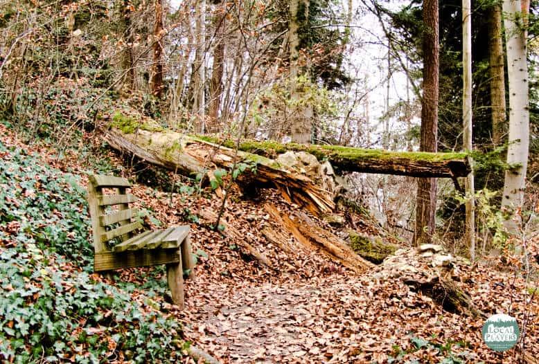 Ruine Albeck - ein kleiner Waldspaziergang durch das Naturschutzgebiet