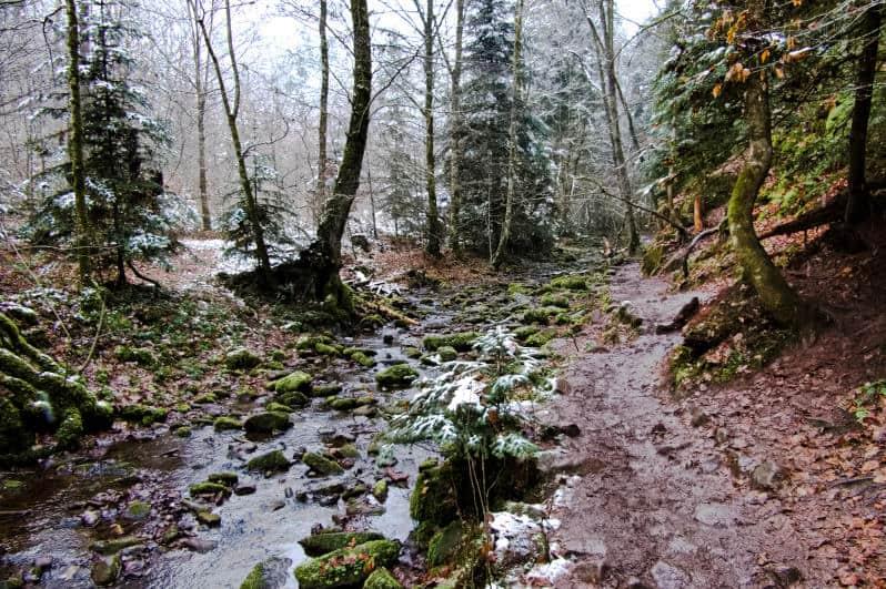 Monbachtal und Monbachschlucht - immer entlang am Bach