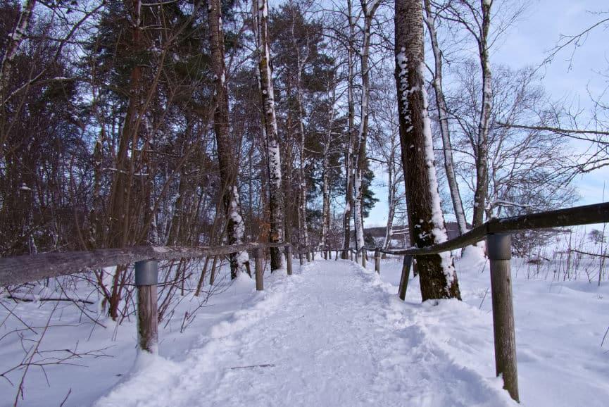 Der Weg über das eigentliche Schopflocher Moor