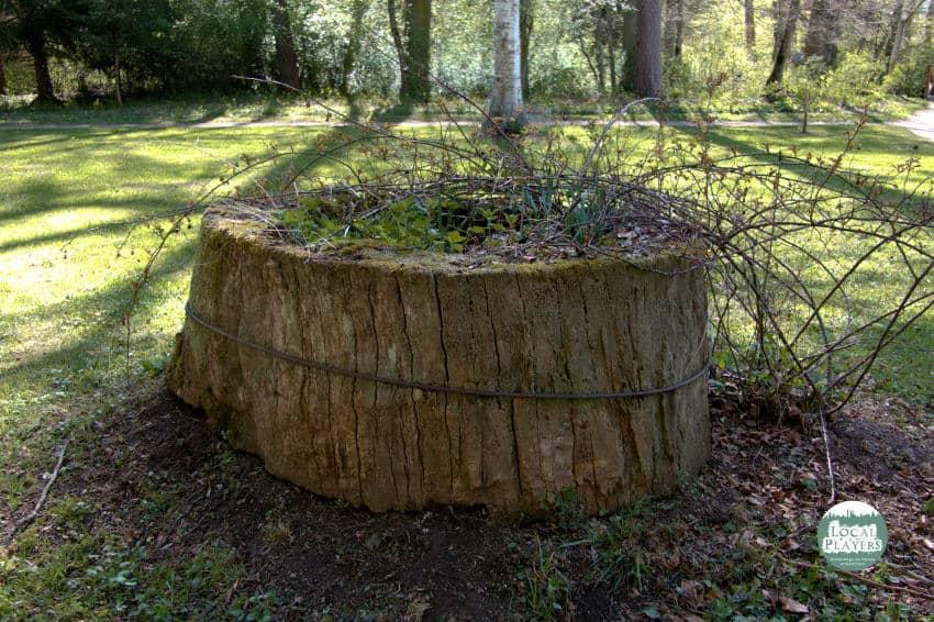 Schlosspark Donaueschingen - ein Baumstumpf als Kunstwerk